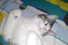 Olly1